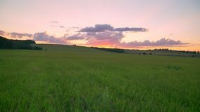 Moving footage using different angles of incredible pink sunset above wheat or rye field, beautiful sky stock footage