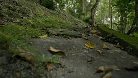 Moving forward with low angle view to the ground. Moving forward with low angle view to the ground in natural park stock footage