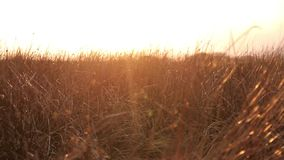 Moving through grass stock video footage