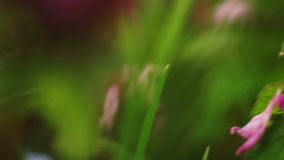 Moving Through Grass Hand held Macro stock footage