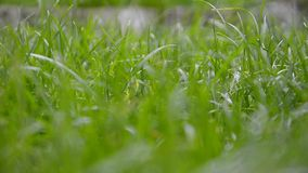 Moving through grass stock footage