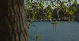 A moving handheld slow motion shot of hanging colourful branches and leaves in Stockholm harbour. stock video footage