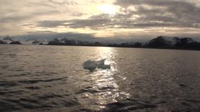 Moving Ice Floes of Arctic Ocean in Svalbard. Wildlife in Nordic badlands. Unique footage and natural landscape of Spitsbergen stock video