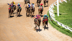moving jocky and horse racing sport Royalty Free Stock Photo