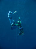 Moving out from the depth of Blue Hole. Two freedivers move out from the depth by line near the coral reef in Blue Hole, Dahab, Egypt royalty free stock image