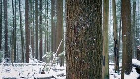 Moving Past Tree Trunk With Snow Falling stock video