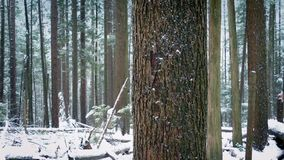 Moving Past Tree Trunk In Snowfall stock video footage