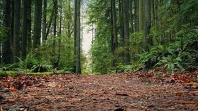 Moving On Path Through The Forest stock footage