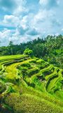 Moving rainy clouds over amazing tegalalang Rice Terrace field with beautiful palm trees growing in cascade, Ubud, Bali Stock Images