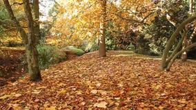 Moving shot at autumn park Stock Image