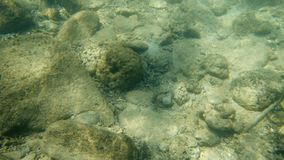 Underwater rocks on the sea floor. A moving shot showcasing the beautiful rocks under a turquoise colored sea water stock video footage