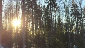 Moving shot of sun peaking thru forest at sunset stock video footage