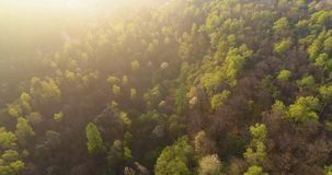Moving side over forest in sunset or sunrise summer day with sun flare. Europe Italy outdoor green nature scape wild stock video