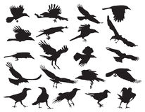 Moving silhouettes of crows. On a white background. Set of  illustrations. EPS 10 Royalty Free Stock Photos