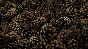 Pine Cones Moving Shot. Moving slowly past a pile of pine cones stock video footage