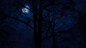 Moving Slowly Past Trees With Moon Above. Tracking shot passing dramatic bare trees with a full moon behind them stock video footage