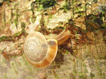 moving Snail  Stock Photo
