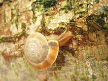 moving Snail  Stock Photo
