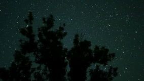 Moving Stars in Night Sky over Trees. Time Lapse. stock video footage