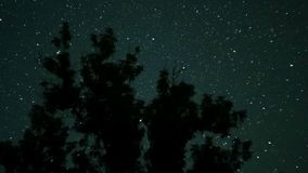 Moving Stars in Night Sky over Trees. Time Lapse. stock video