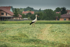 A moving stork Stock Photos