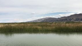 Moving by Titicaca waters. Moving by Titicaca lake waters along green reeds thicket in Peru stock video