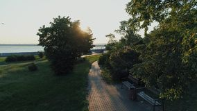 Aerial drone fooage. Moving between trees in beautiful sunny morning just after sunrise. Moving between trees in beautiful sunny morning just after sunrise stock footage