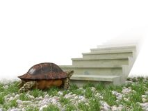 Moving turtle wants to climb on the stairs concept background Stock Photos