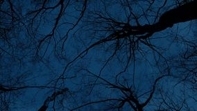 Moving Under Bare Trees At Night. Moving slowly under large trees in the dark stock video footage
