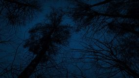 Moving Under Tall Trees In The Dark. Moving slowly under towering trees at night stock footage