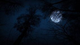 Moving Under Trees With Full Moon At Night. Tracking shot moving through woods looking up at full moon behind the branches stock video