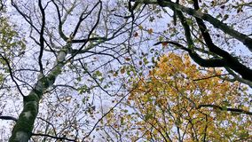 Moving Under Trees Looking Up. Low angle tracking shot underneath pretty trees stock footage