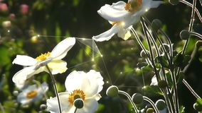 Moving white flowers stock footage