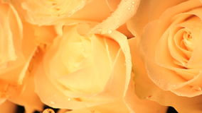 Moving white rose petal super close-up stock footage