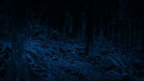 Moving Through Woodland At Night stock video footage