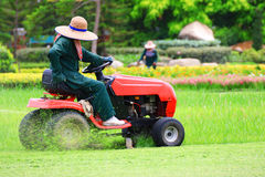 Mow the lawn. In the park Royalty Free Stock Image