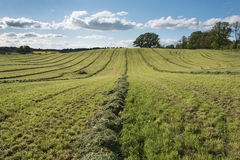 Mowed agricultural field. Royalty Free Stock Photo