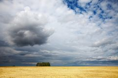 Mowed cornfield. Landscape with mowed cornfield and cloudy sky Royalty Free Stock Image