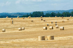 Mowed cornfield with straw bales Stock Image