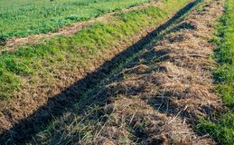 Mowed and dried grass next to a long straight ditch in early mor. Ning sunlight. The ditch is diagonal in the picture. It is autumn now royalty free stock images