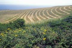 Mowed fields juxtaposed against wildflowers, Northern CA Royalty Free Stock Photo