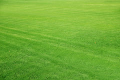 Mowed Football ground, green lawn background Royalty Free Stock Image