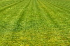 Mowed football playground Stock Photo