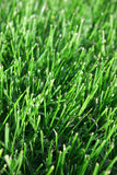 Mowed Grass Royalty Free Stock Images