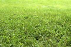 Mowed grass. Lawn grass Royalty Free Stock Images