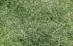 Mowed grass Stock Photo