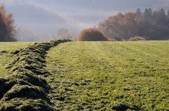 Autumn morning. Mowed grass drying in meadow with forest in background Stock Images