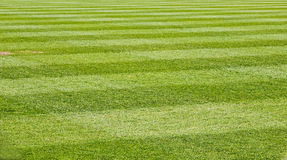 Mowed Grass Field Royalty Free Stock Photos