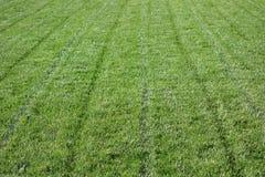 Mowed Grass royalty free stock photos