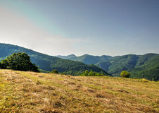 Mowed Grass on Mountain Meadow Stock Photography
